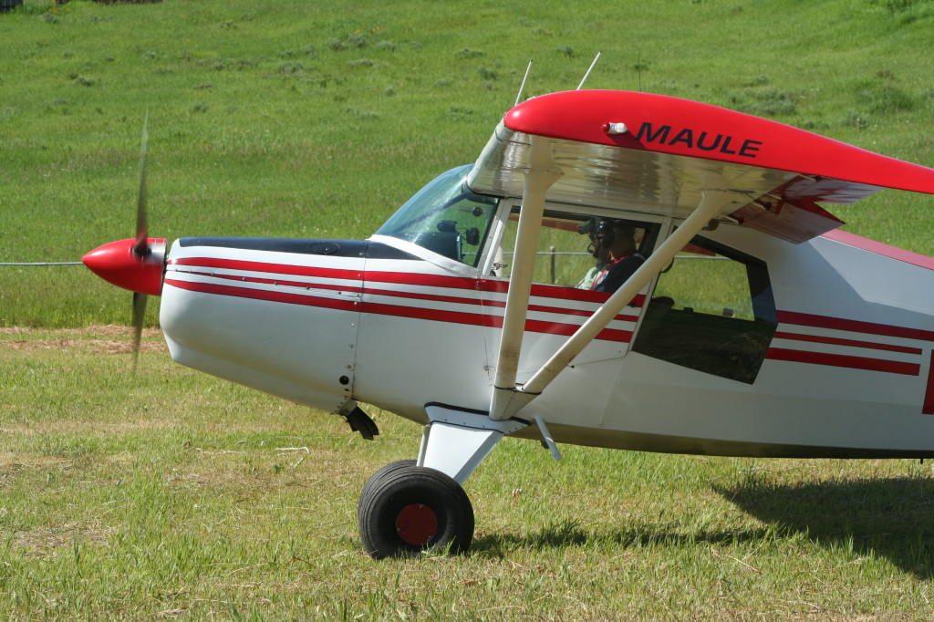 Maule on grass strip